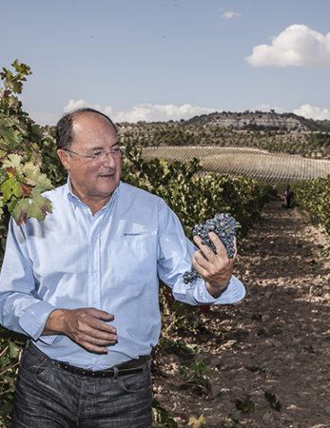 Visitando el viñedo (1)