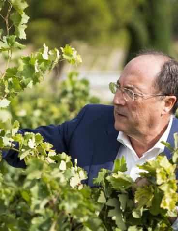 Visitando el viñedo (3)