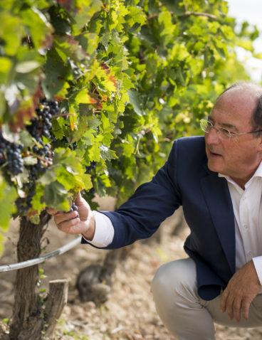 Visitando el viñedo (4)