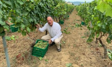 First Harvest at Casar De Vide