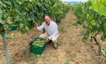 First Harvest at Casar De Vide